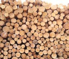Les rondins de bois sont stockés avant d'être travaillés