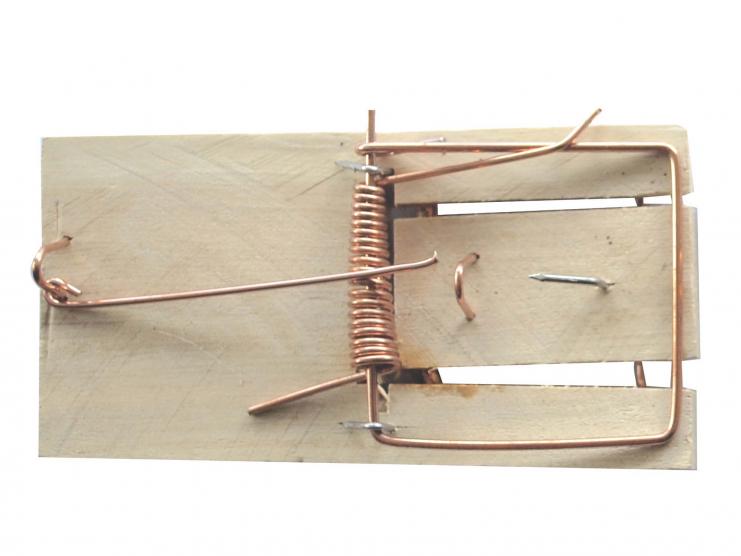 5 tapettes à souris en bois
