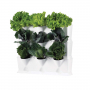 Ensemble pour murs végétaux