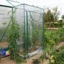 serre souple pour tomates