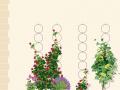 Pour faire grimper vos plantes