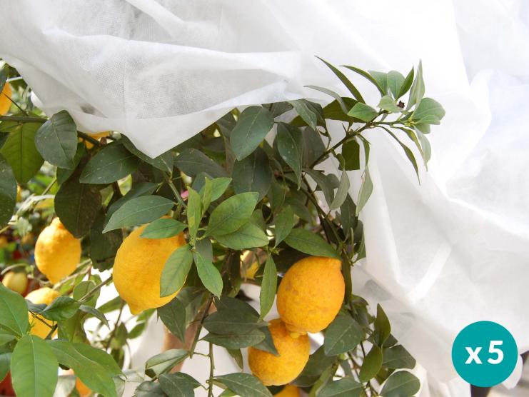 Protégez vos plantes et agrumes du froid