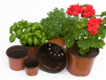 Lot de 12 pots de germination