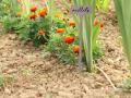 Mieux organiser votre jardin