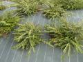 Protégez vos plantations des mauvaises herbes
