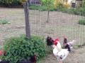 Pour les travaux de clôture