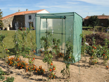 Serre pour tomates 1,98m x 0,78m x H. 2,00m