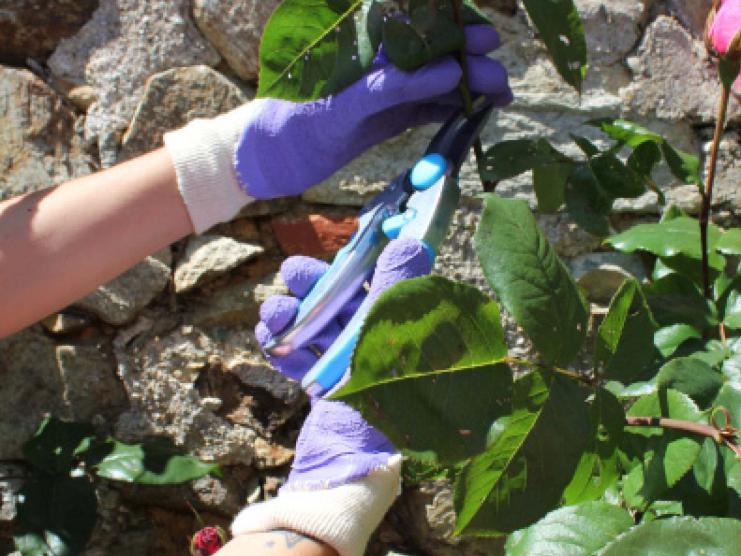Gants de jardinage Rosier Color Petits Epineux
